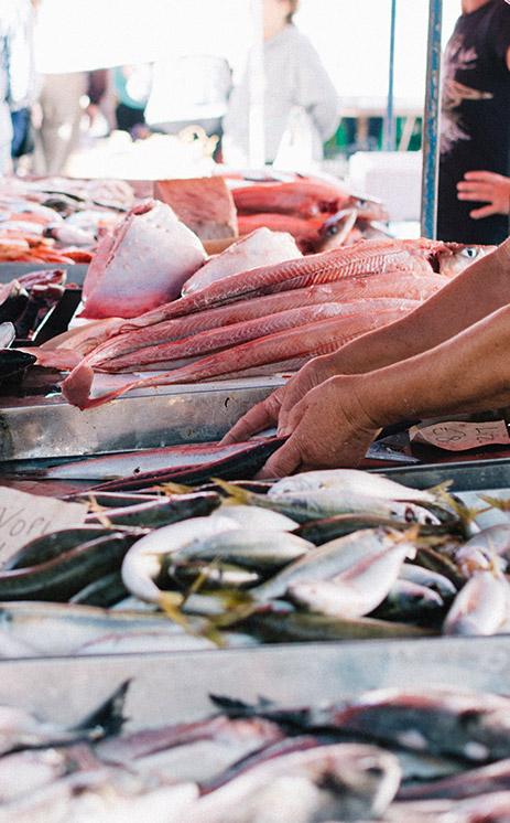 fish-market-comit